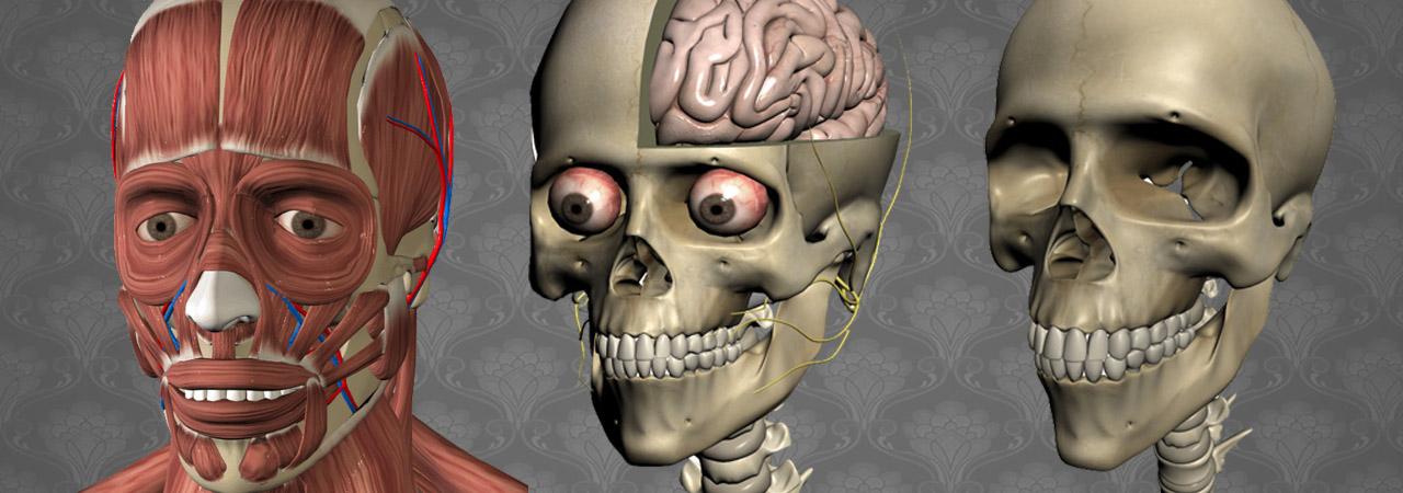 Education Mobile   3D Anatomy app